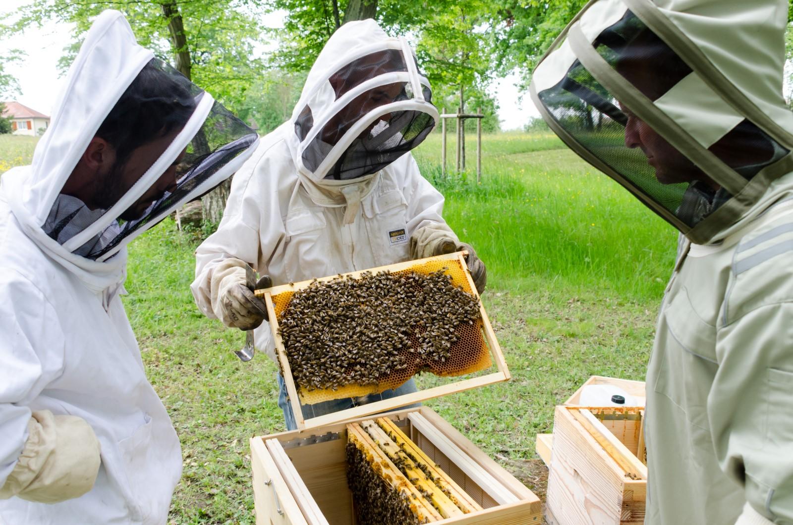 Installation ruches abeilles apiculteurs