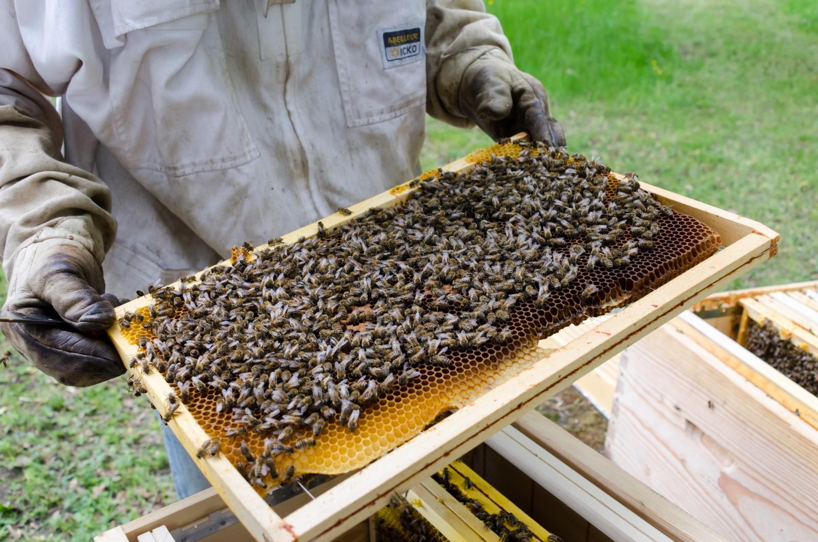 ruche abeilles apiculteur cire rayon de miel